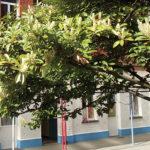 Institut des Filles de Marie - Secondaire | Saint-Gilles