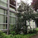 école primaire Saint-Curé d'Ars Forest arbre