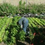 Ecole secondaire spécialisée le foyer agriculture