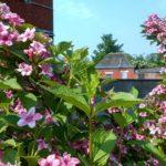 Ecole Spécialisée secondaire le ricochet les colibris